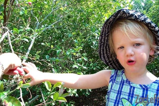 Blueberry picking | ZagLeft
